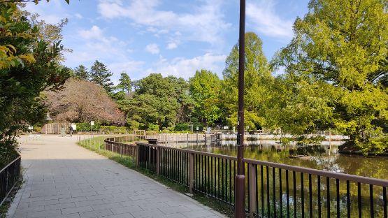 大宮公園の画像