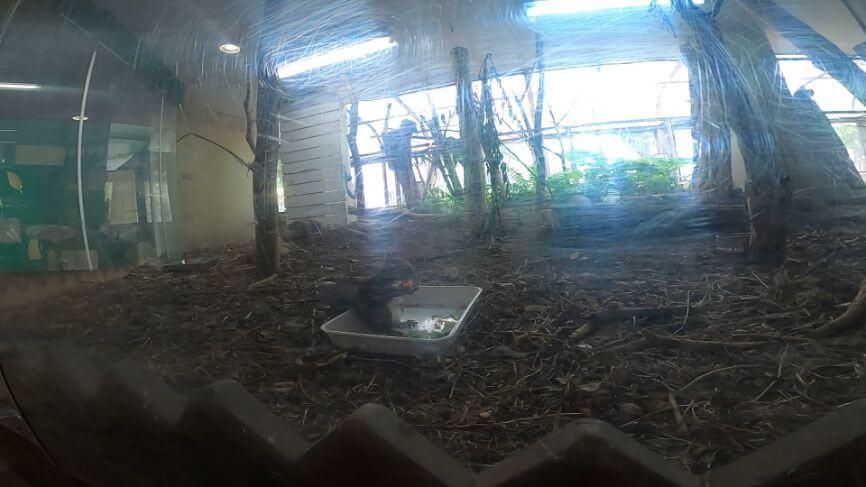 円山動物園ウサギの画像