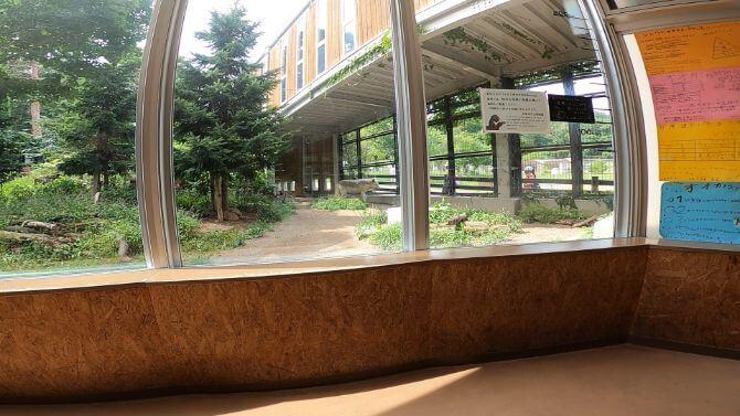 円山動物園のオオカミの画像