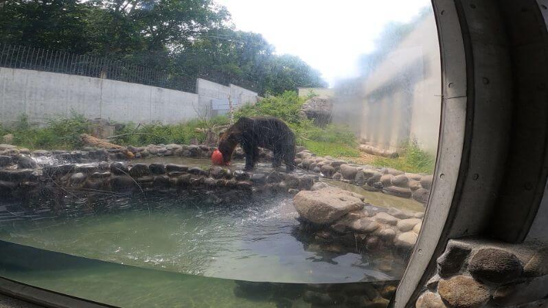 円山動物園のアザラシの画像