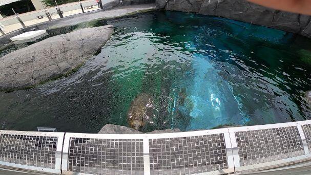 円山動物園の画像