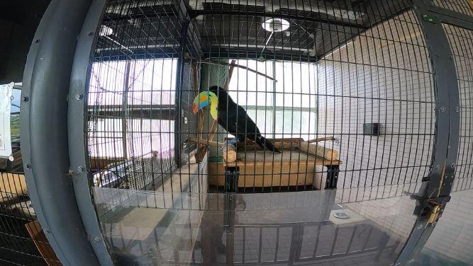 円山動物園の鳥の画像