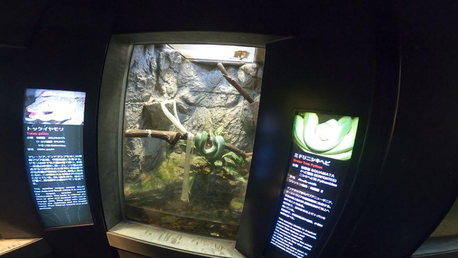 円山動物園の爬虫類の画像
