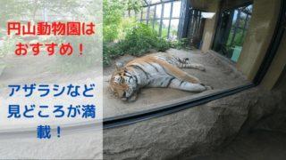 円山動物園はおすすめ!アザラシなど見どころが満載!の画像